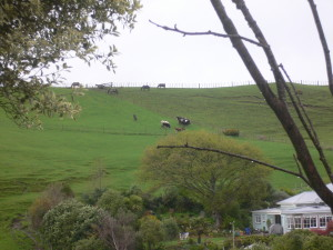 Modern Māori farm in Whanganui which incorporates papakāinga housing and a Marae.