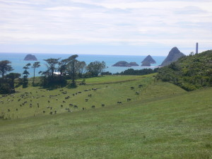 Ngāmotu ('the Islands') viewed from Omata, Central Taranaki.
